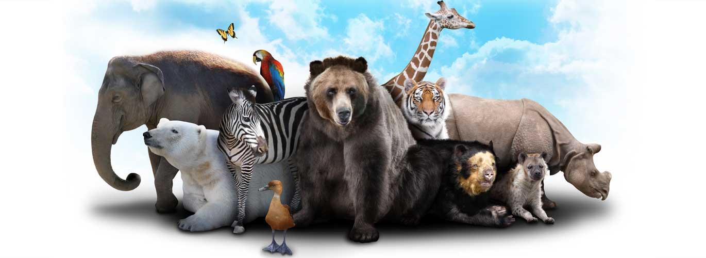 Vier Möglichkeiten der Tierheilpraktiker Spezialisierung