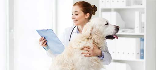 Tierheilpraktiker Berufsbild, Hund wird von der Tierheilpraktikerin gestreichelt