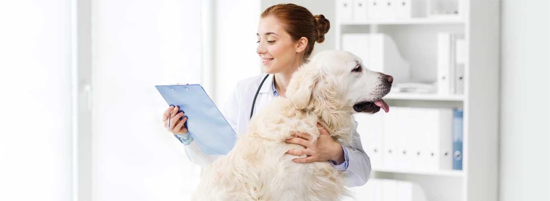 Das Berufsbild eines Tierheilpraktikers