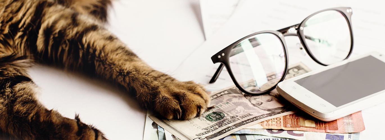 Das Tierheilpraktiker Gehalt im Ranking