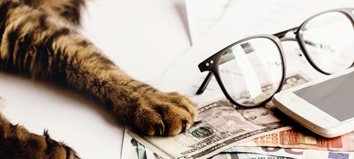 Tierheilpraktiker Gehalt - Katze liegt auf Geldscheinen