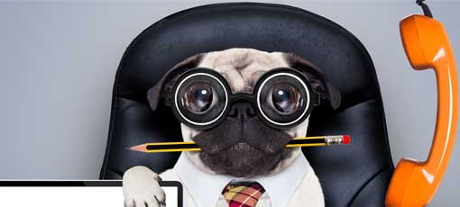 Tierheilpraktiker werden, die Voraussetzungen - Hund hält Checkliste in der Pfote