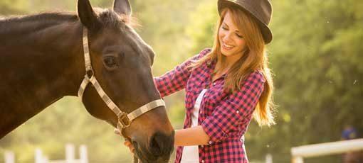 Futtermittelberater für Pferde