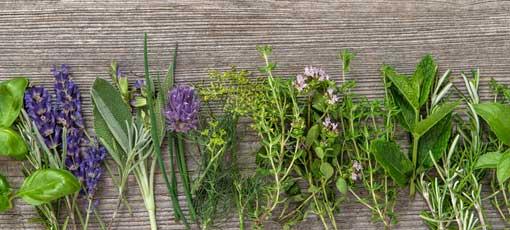 Ausbildung Heilpflanzenkunde, auch Phytotherapie oder Pflanzenheilkunde genannt