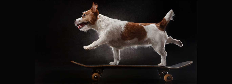 Mit der Hundetrainer Ausbildung zum Profi