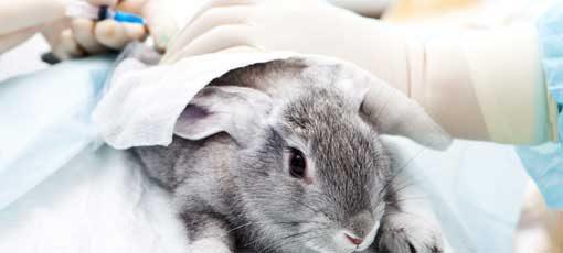 Ausbildung zur Tiermedizinischen Fachangestellten