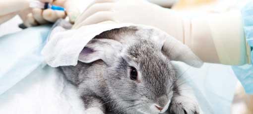 Ausbildung zur tiermedizinischen Fachangestellte - Kaninchen wird behandelt