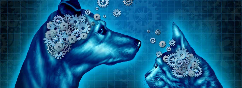 Tierpsychologie im Studium