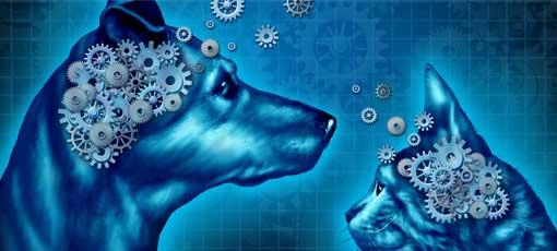Fernstudium Tierpsychologie - Verhalten von Tieren studieren und verstehen