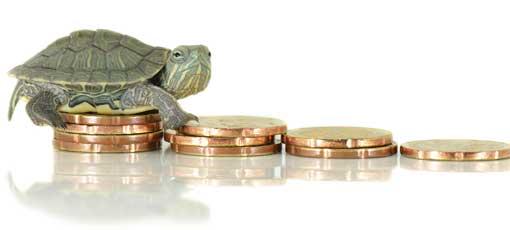 Ausbildung Tierheilpraktiker Kosten - Schildkröte sitzt auf Geldstapel