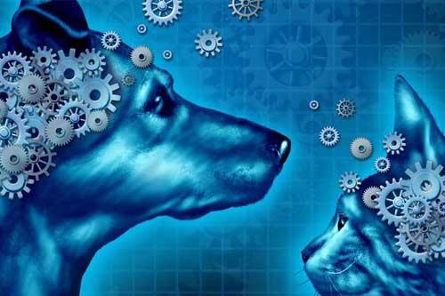 Grundlagen der artgerechten Tierhaltung