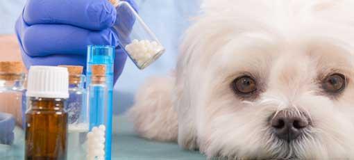 """Der Fernlehrgang """"Homöopathie für Tiere"""" zeigt neue interessante Behandlungsperspektiven auf"""