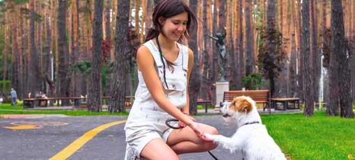 Umgang mit Hunden per Fernstudium erlernen und erfolgreich in die Praxis umsetzen